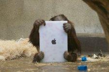Apple singes iOS ipad images screenshots 0008